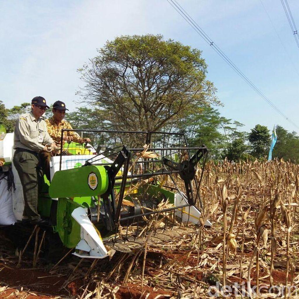 Mentan: Petani Lagi Senang Tanam Jagung