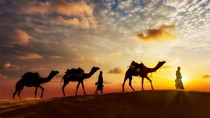 PNS Arab Kerja Digaji Rp 31 Juta/Bulan, Menteri: Segera Dipangkas