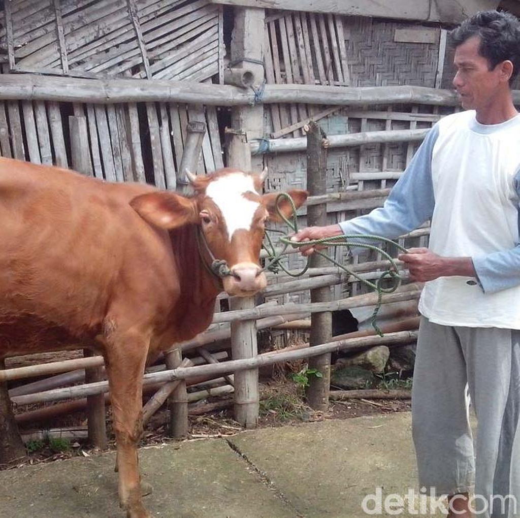 Apa Kabar Pembangunan Pulau Karantina Sapi di Belitung?