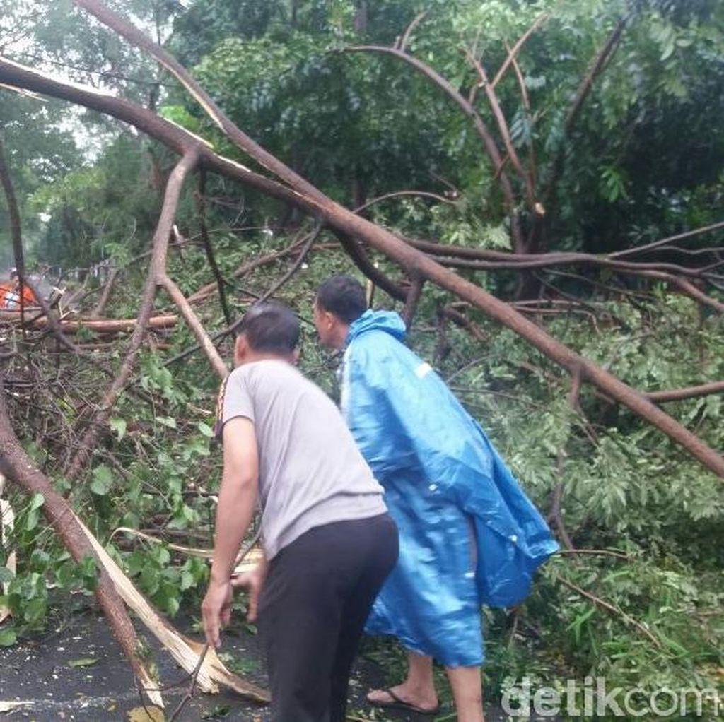 Hujan Deras, Sebuah Pohon Tumbang Tutup Jalan di Tangerang