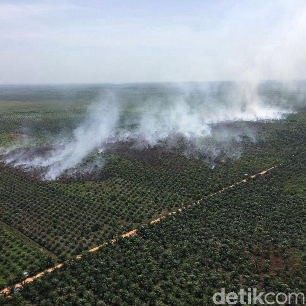 40 Hektare Lahan di Riau Sengaja Dibakar, Ini Penampakannya