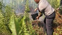 Jelang Musim Kemarau, Pemerintah Siapkan Antisipasi Kebakaran Hutan
