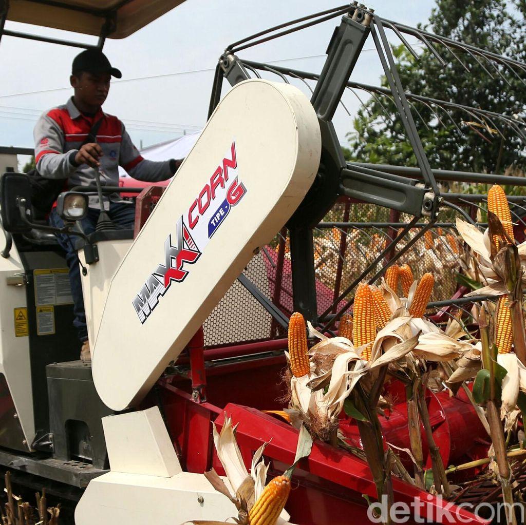 Kementan: Produksi Jagung Surplus, Nggak Ada Lagi Impor