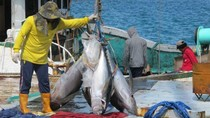 Udang Hingga Tuna RI Rajin Diekspor ke AS dan Jepang