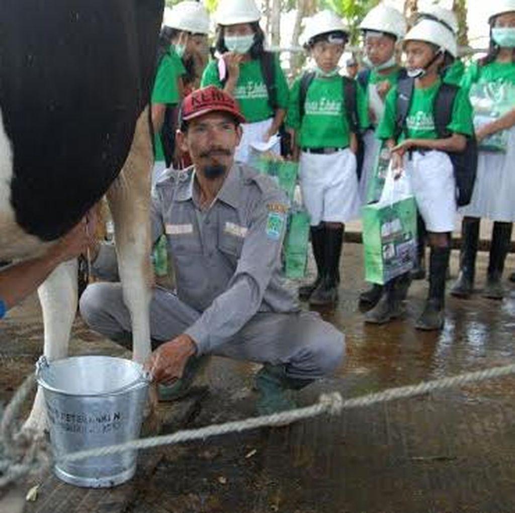 Kabupaten Pasuruan Bangun Kampung Susu
