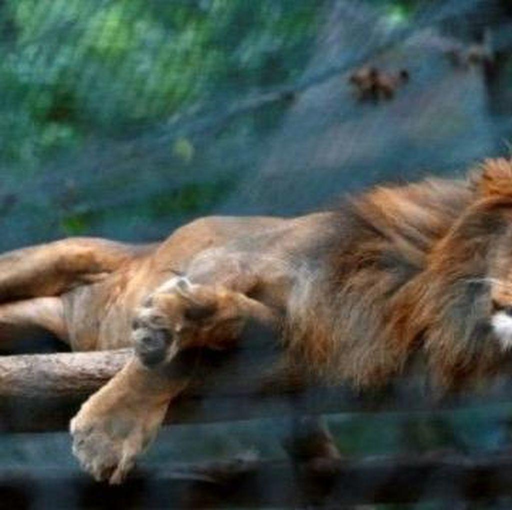 Puluhan Hewan di Kebun Binatang Venezuela Mati Kelaparan