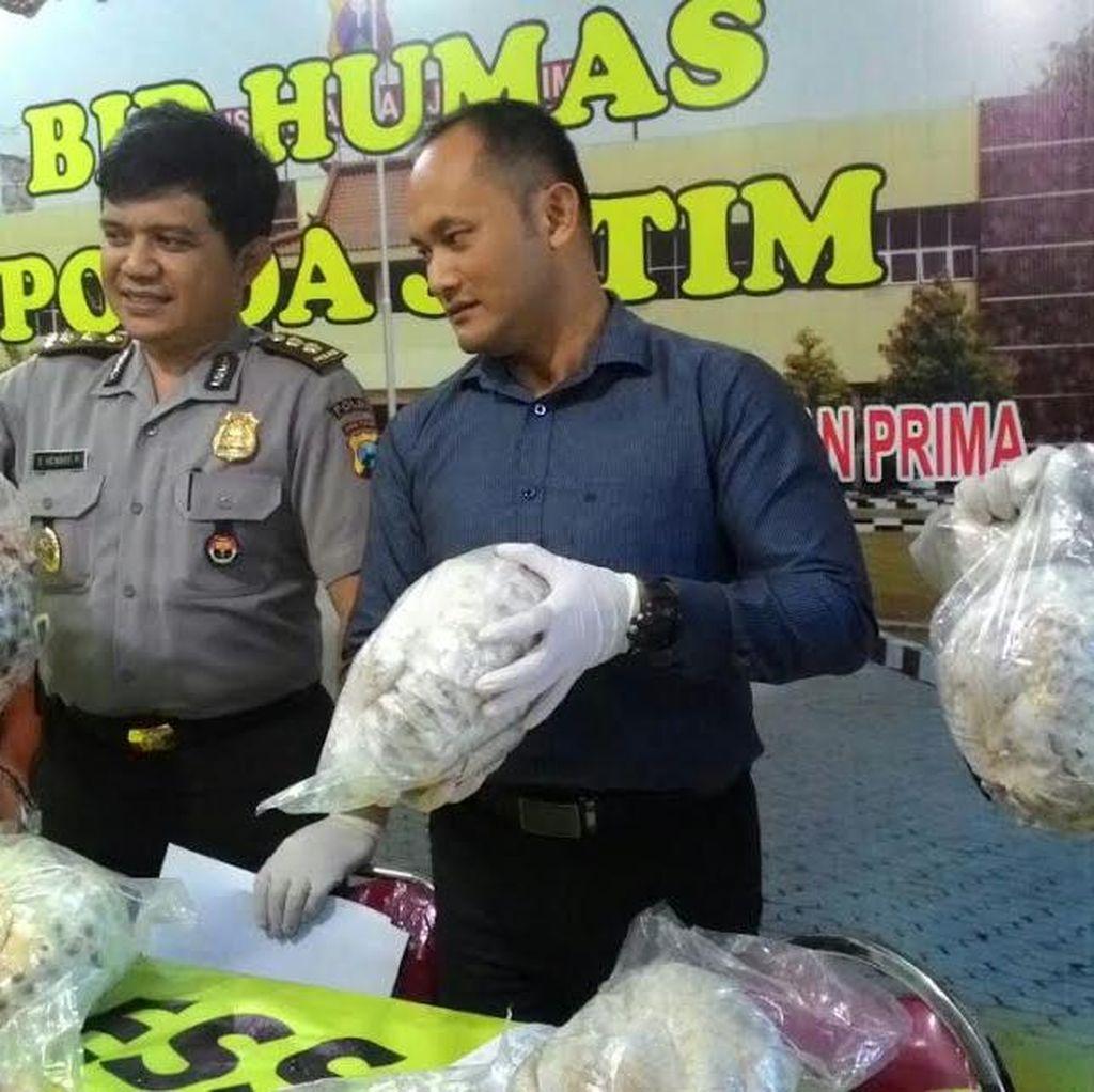 Penyimpanan Ratusan Trenggiling Beku Dibongkar Polda Jatim