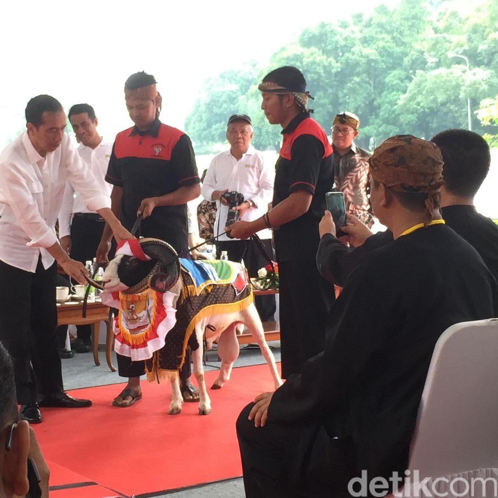 Peternak Domba se-Indonesia Curhat ke Jokowi, Termasuk Wakil Ketua PPATK