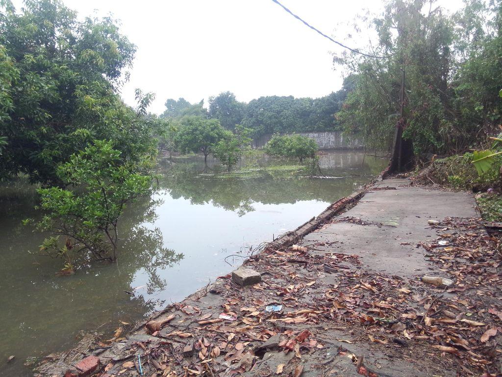 Tembok Kali Krukut Juga Jebol di Kemang Selatan, Kebun pun Jadi Rawa