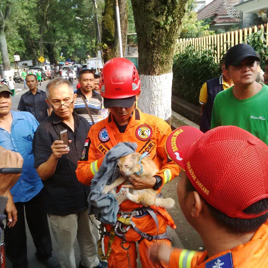 Regu Penyelamat di Bandung Sukses Turunkan Kucing yang Terjebak Semalam di Pohon