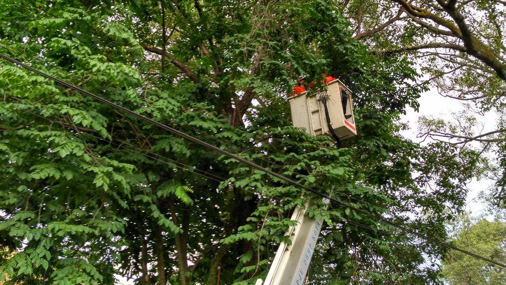 Begini Momen Regu Penyelamat di Bandung Selamatkan Kucing Terjebak di Pohon