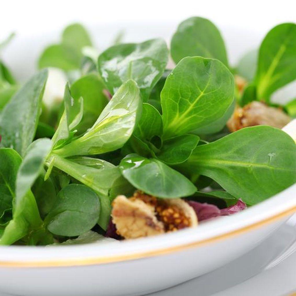 Daun Salad Layu dan Kurang Renyah, Ini Cara Mengatasinya