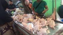 Harga Daging Ayam Naik Rp 5.000/Ekor