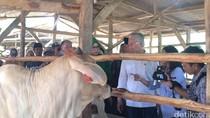Curhat Peternak Sapi ke Mendag: Pak Menteri, Kami Resah Ada Daging Impor