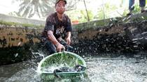 Agus, Anak Desa di Banyuwangi Ini Raup Puluhan Juta dari Bisnis Lele