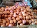 Harga Telur Ayam Turun, Beras Stabil
