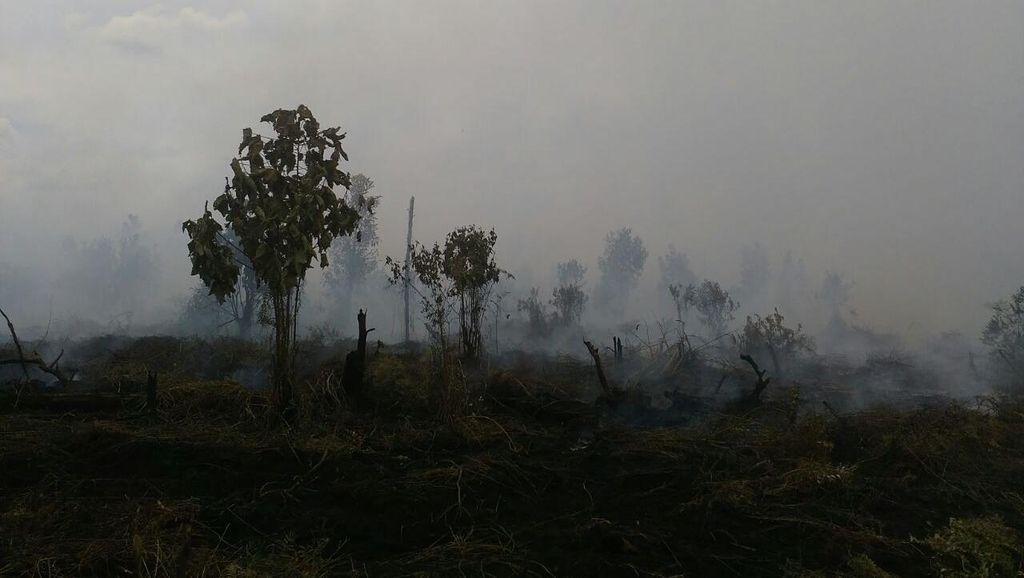 Kebakaran Lahan Kembali Terjadi di Kabupaten Kampar Riau