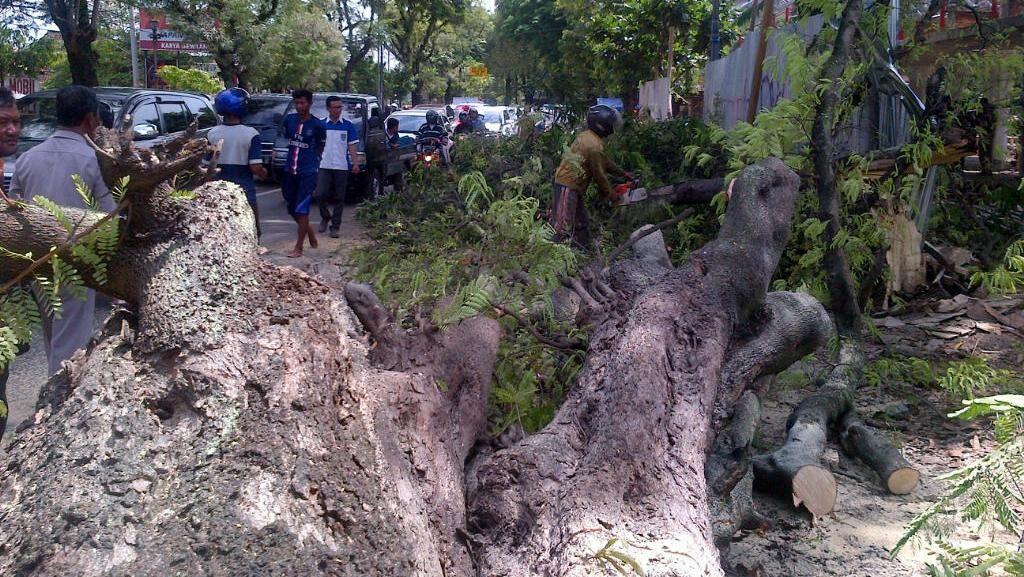 Pemotor Tewas Tertimpa Pohon, Wali Kota Semarang Imbau Warga Waspada