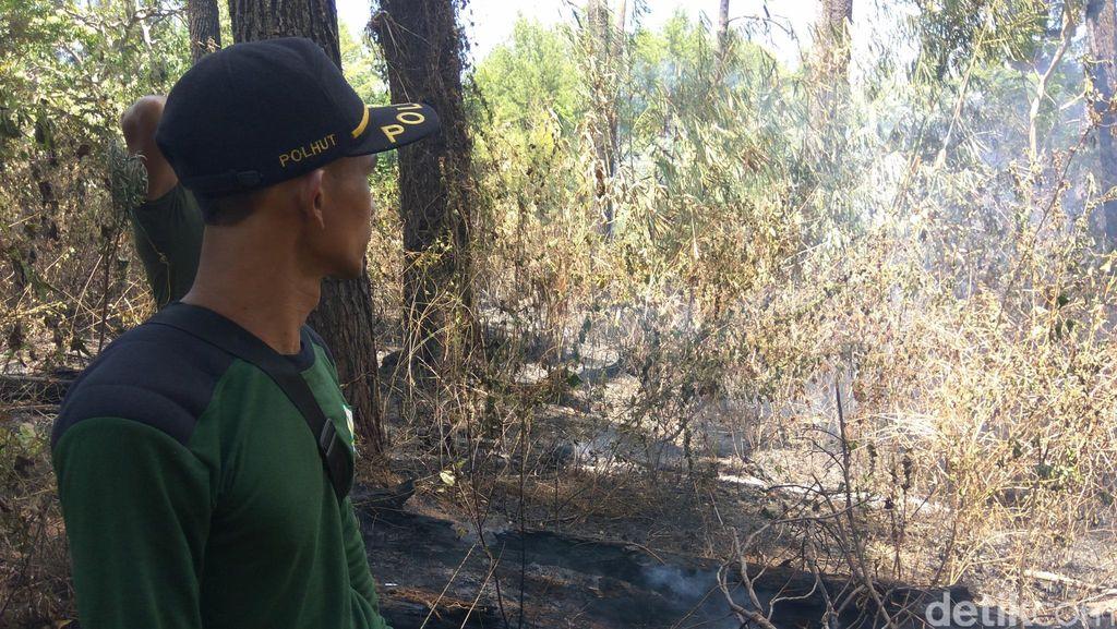 20 Hektare Hutan Tahura di Aceh Besar Terbakar