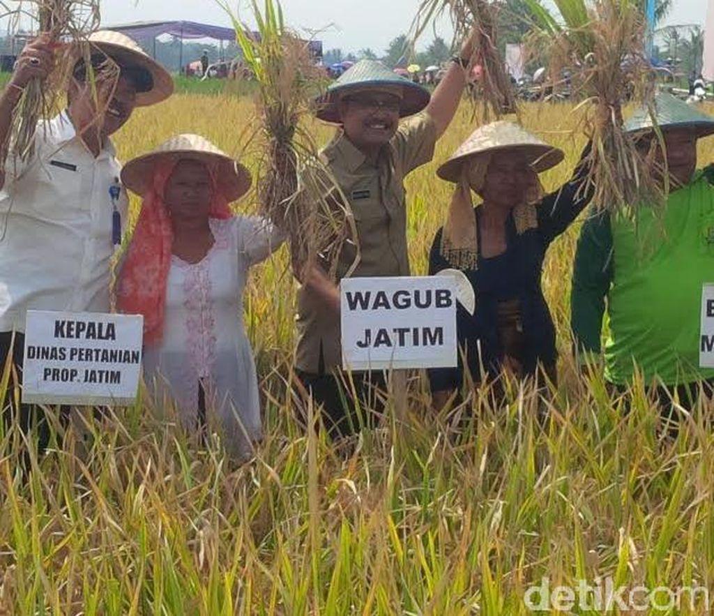 Jawa Timur Berupaya Mempertahankan Target Produksi Padi