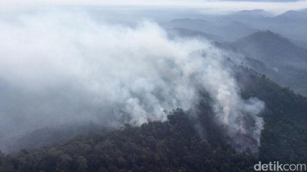 Hutan Lindung Batang Ulak di Kabupaten Kampar Riau Terbakar