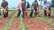 Ini Jurus Kabupaten Lamongan Tingkatkan Produksi Jagung