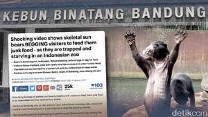 Beruang Kurus Bonbin Bandung