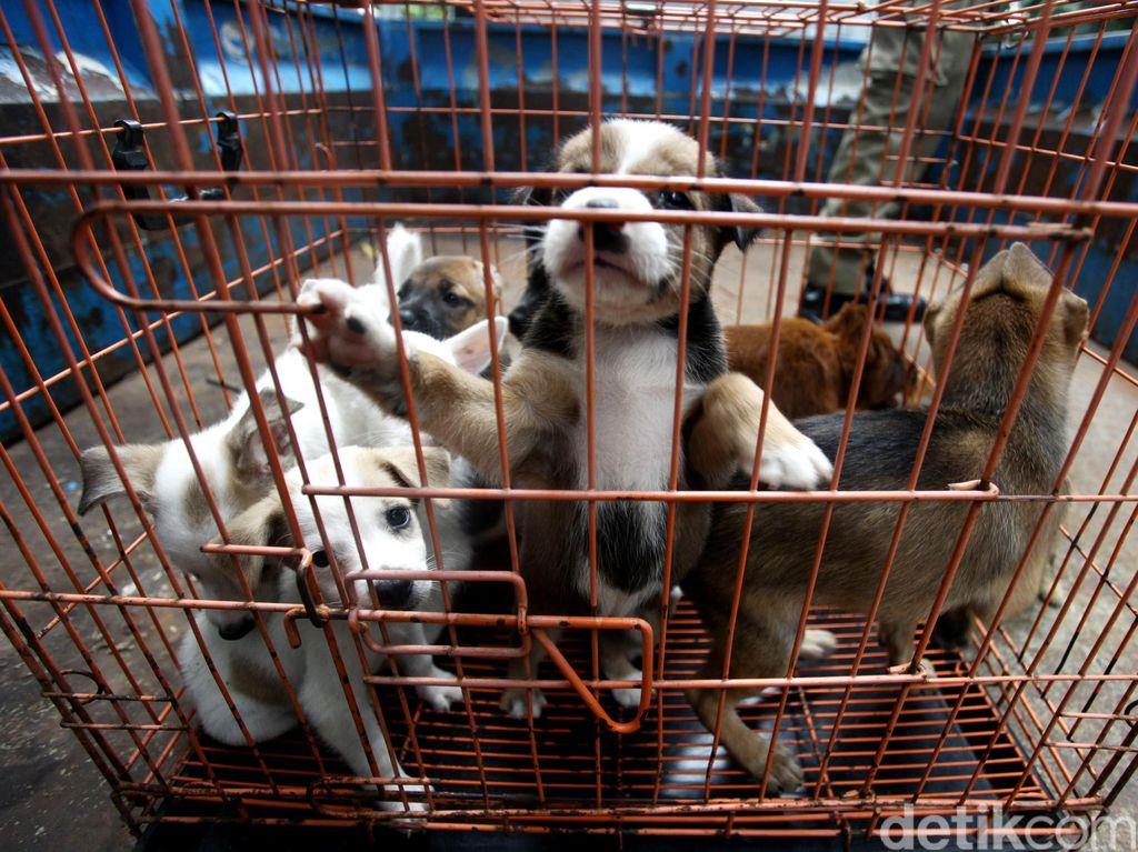 Begini Tantangan Mengendalikan Rabies di Nusa Tenggara Timur