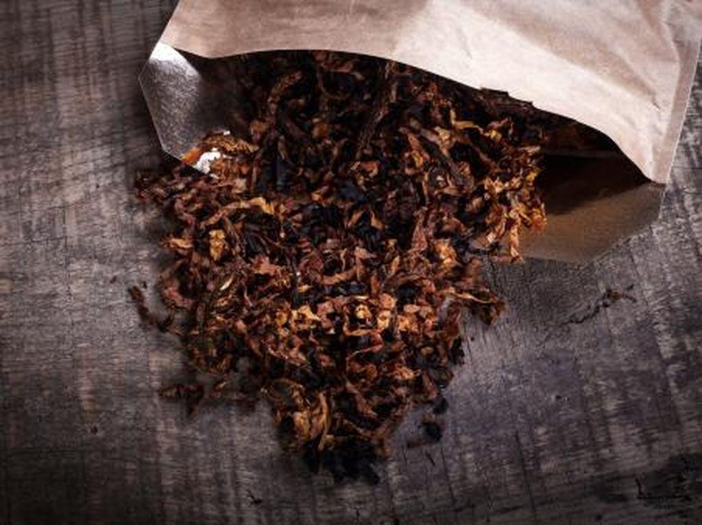 Efek Nikotin pada Otak Hingga Bikin Orang Kecanduan Merokok