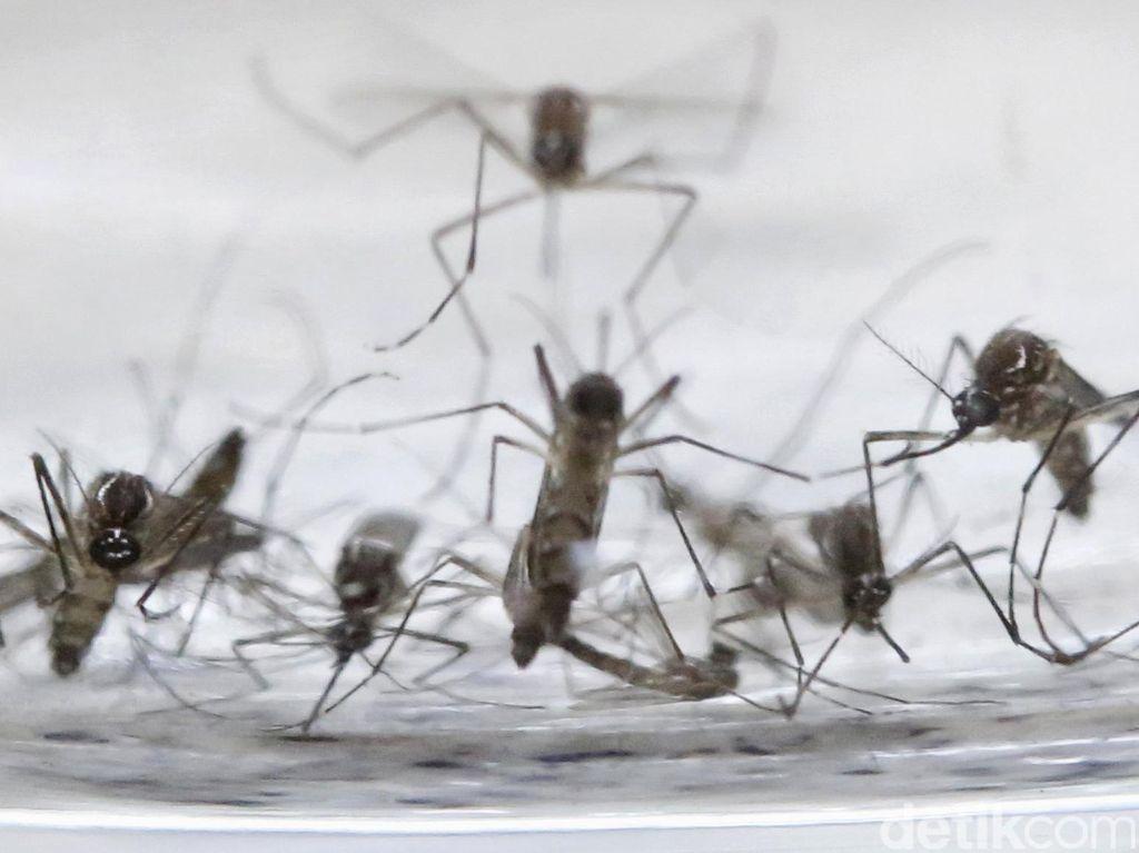 Peneliti WHO: Indonesia Tak Perlu Takut Zika, Kendalikan Saja Dulu DBD