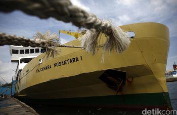 Kapal Ternak KM Camara Bawa 299 Ekor Sapi
