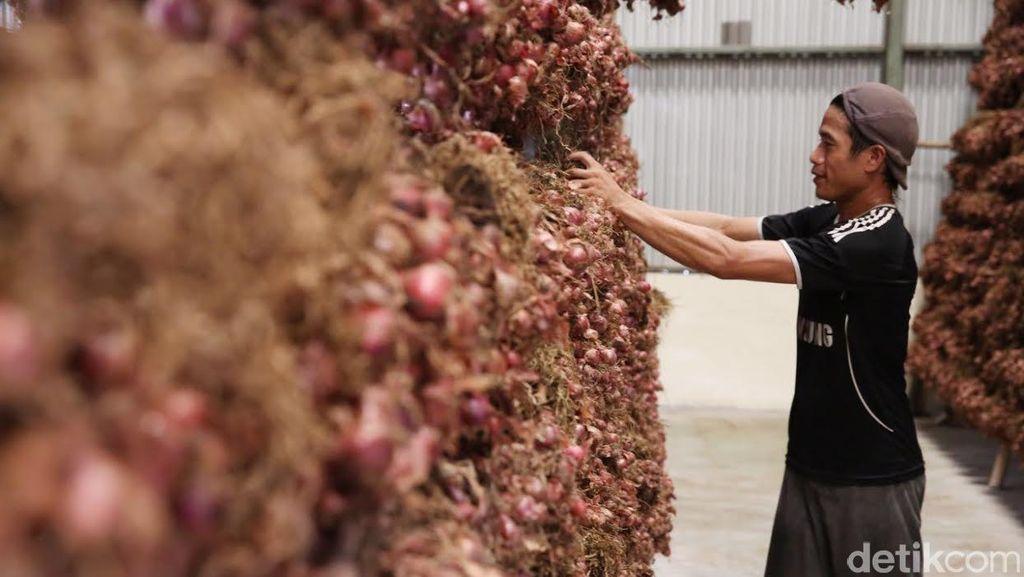 Keluhan Petani: Bibit Bawang Merah Mahal, Harusnya Itu Yang Diimpor