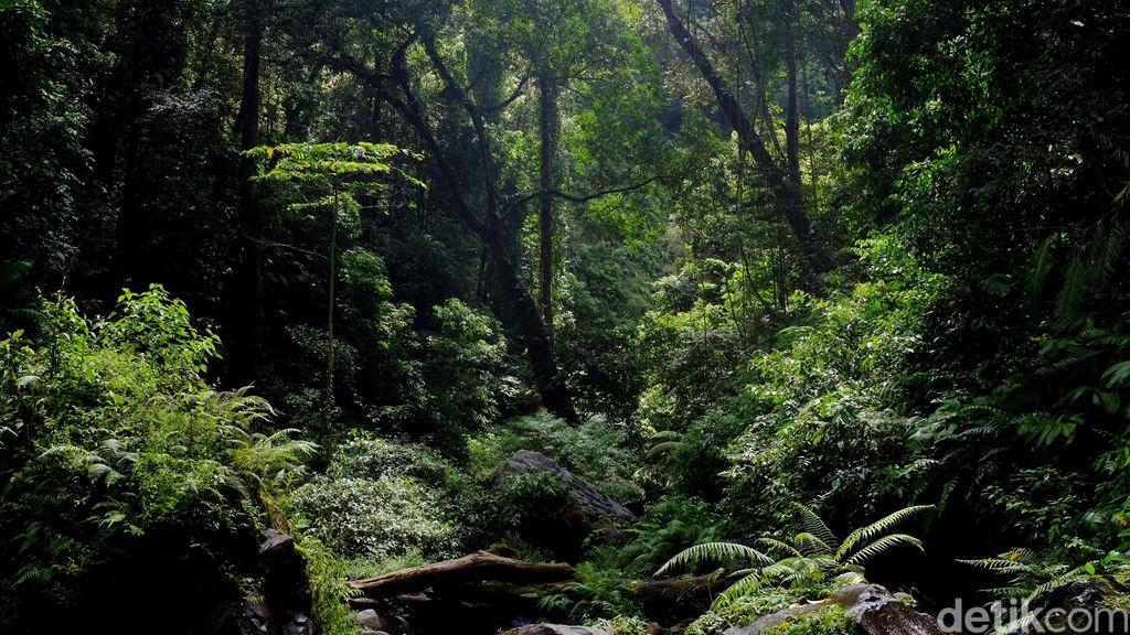 Bocah Hilang di Hutan Usai Dihukum Orangtuanya, Publik Jepang Marah
