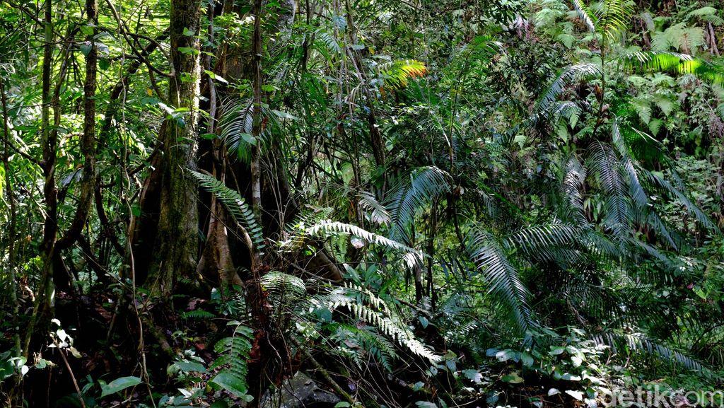 Bocah Jepang Hilang di Hutan Usai Dihukum Orangtuanya, Pencarian Diperluas