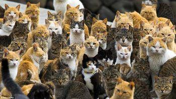 Potret Pulau Jepang yang Dikuasai Kucing