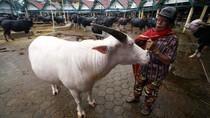Daging Kerbau Sudah Puluhan Tahun Masuk ke RI, Tapi Ilegal