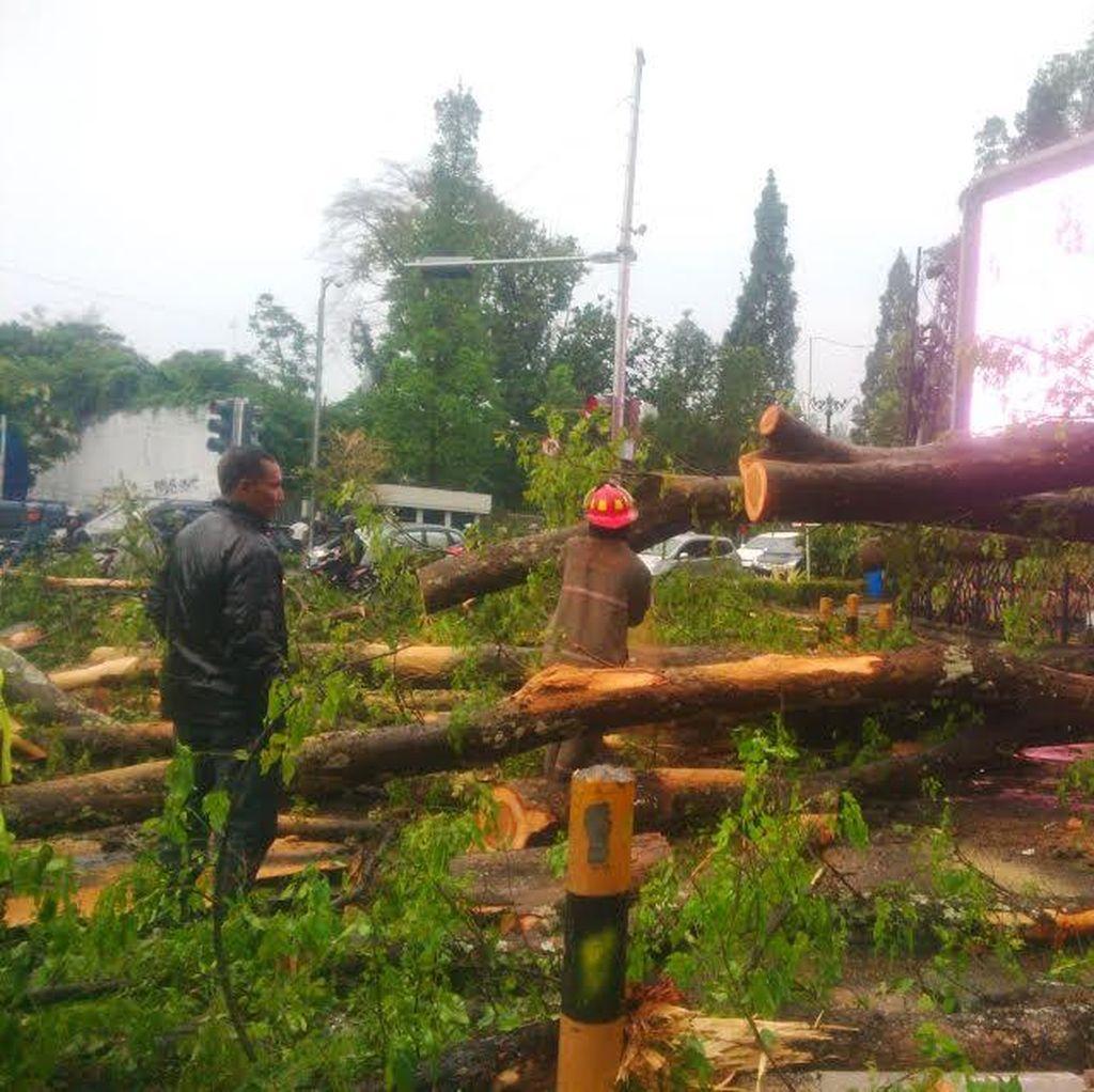Hujan Angin Landa Bandung, Pohon Tumbang Bergelimpangan di Dago