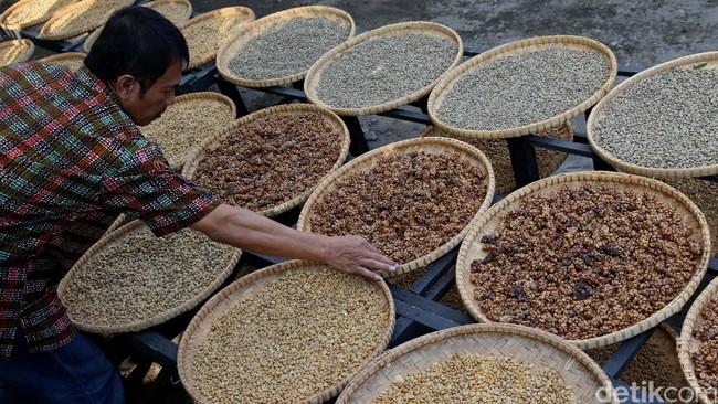 JK: Vietnam Salip RI di Urutan Produsen Kopi Dunia