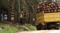 RI dan Malaysia Kerja Sama Garap Zona Ekonomi Khusus Sawit