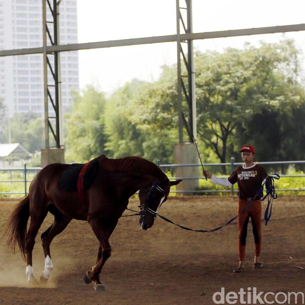 Tanggapan Pordasi DKI Soal Keberadaan Kuda-kuda di Pulo Mas