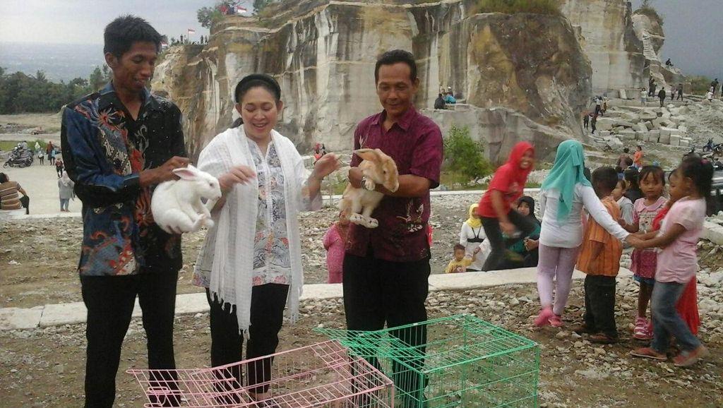 Melihat Kunker Titiek Soeharto di Yogya: Bagi Bibit Sapi dan Kelinci