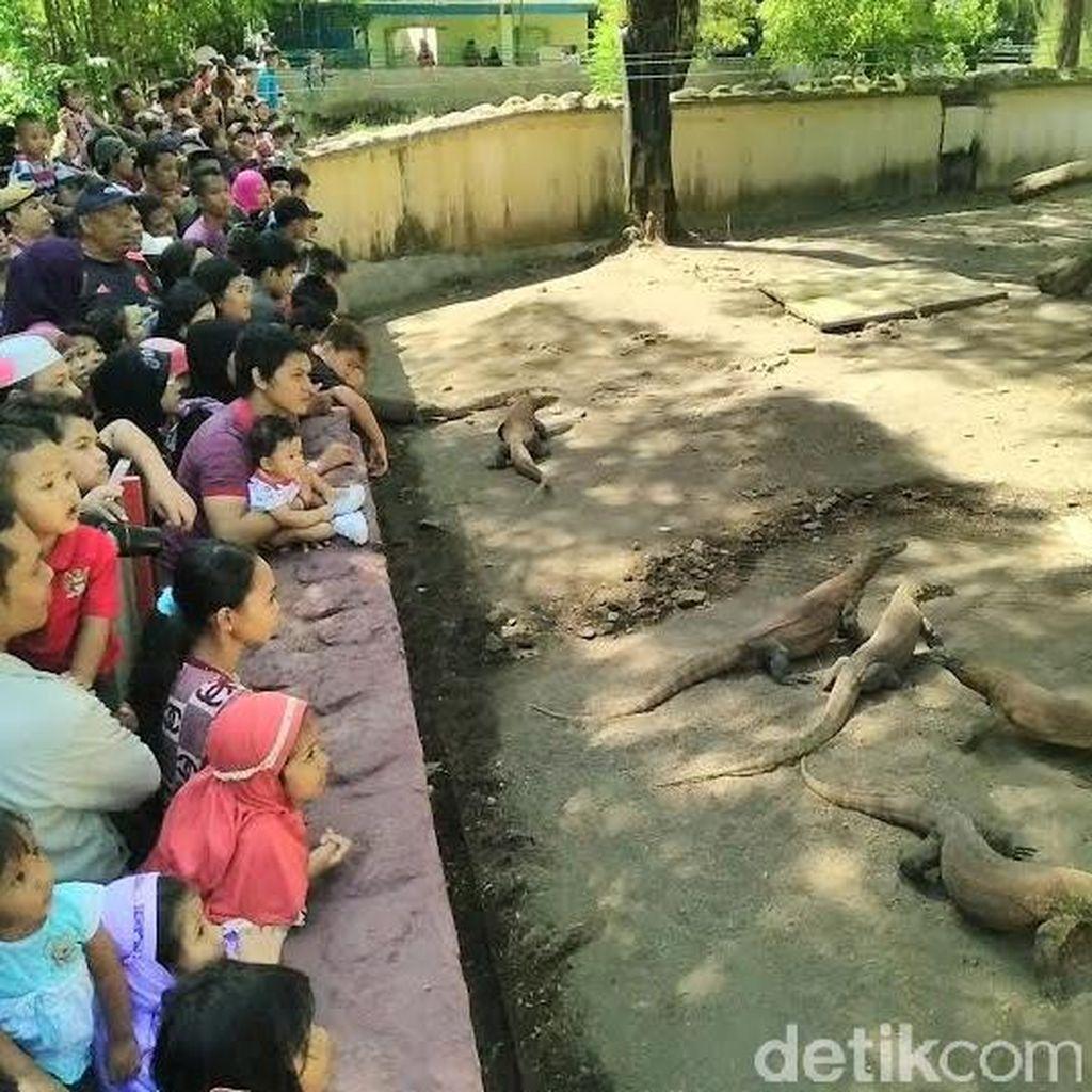 Kebun Binatang Fukuoka Jajaki Kerjasama dengan KBS