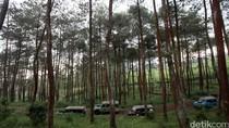 Pengusaha Hutan RI Siapkan Investasi US$ 166 Miliar Hingga 2045