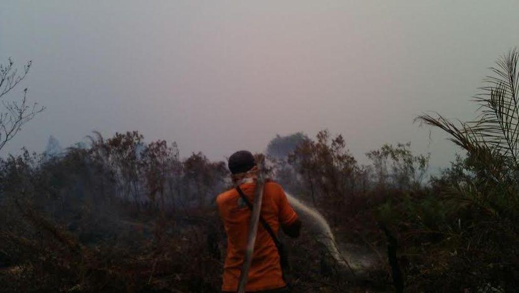 Pekanbaru Dikepung Asap, Ini Penampakan Lahan Terbakar di Riau