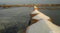 Masalah Lahan dan Cuaca Bikin Kualitas Garam Lokal Kalah dengan Impor