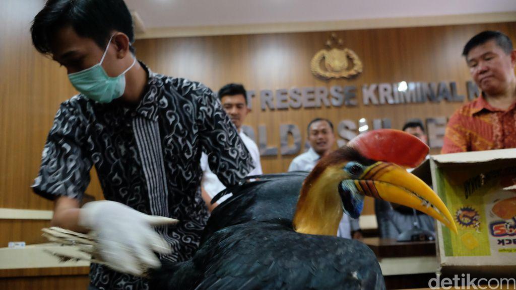 Polda Sulsel Sita Belasan Burung Langka Koleksi Pemuda di Makassar