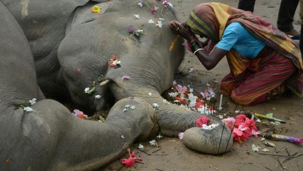 2 Gajah di India Mati Gara-gara Tersetrum Tiang Listrik