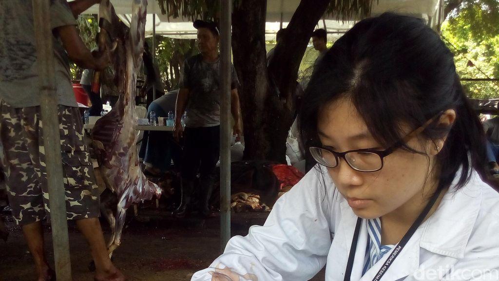 Temukan Cacing di Hati Sapi, Begini Tugas Pengawas Kesehatan Daging Kurban
