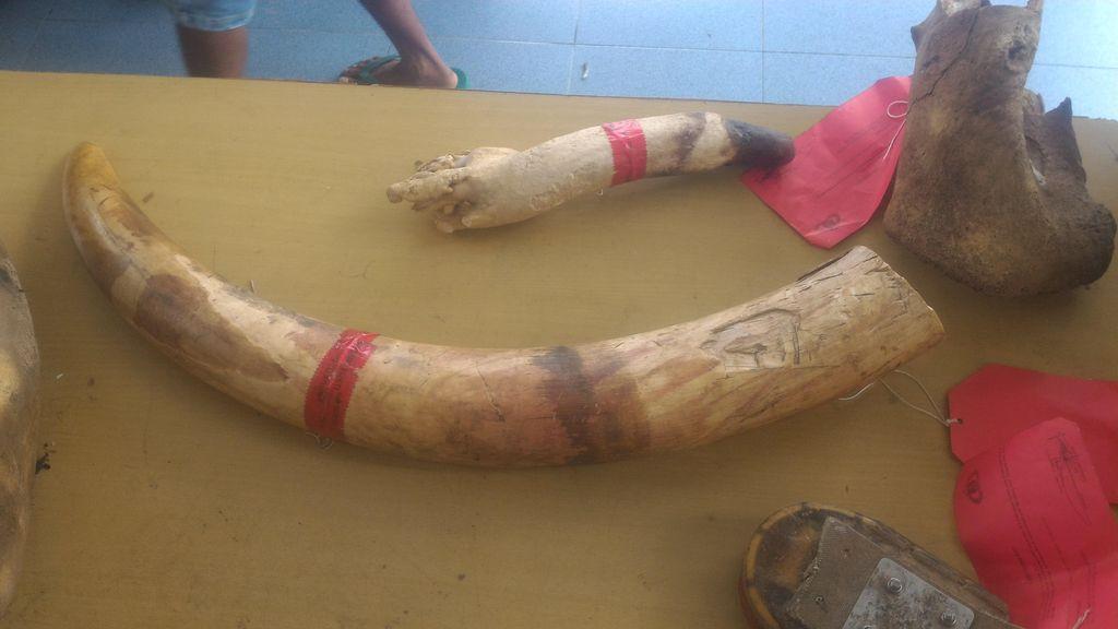 Bunuh Gajah yang Rusak Kebun, Warga Jambi Dihukum 1,6 Tahun Penjara