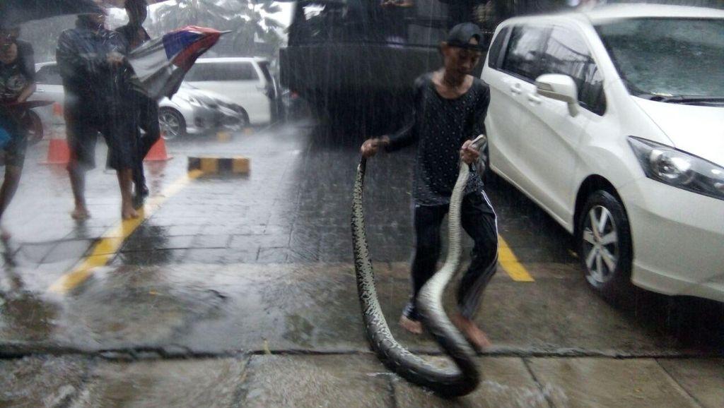 Cerita Petugas yang Sering Temukan Ular dan Biawak Saat Banjir di Jakarta